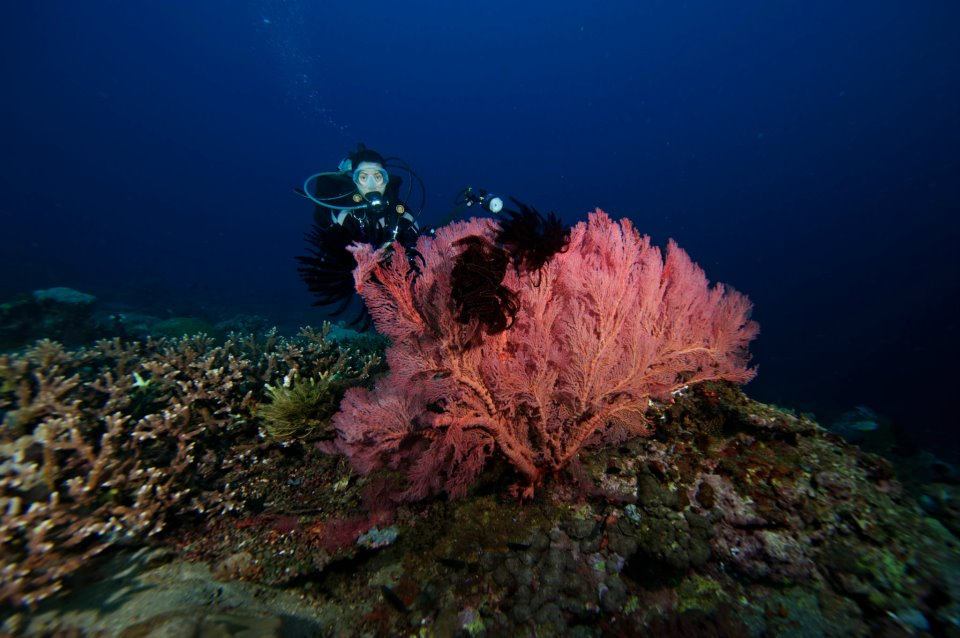Tubbataha Reef awarded by TripAdvisor