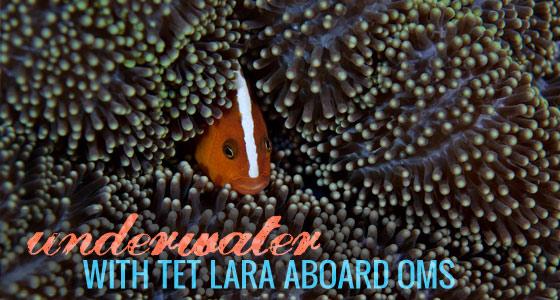 Tet Lara, Pre Summer 2012